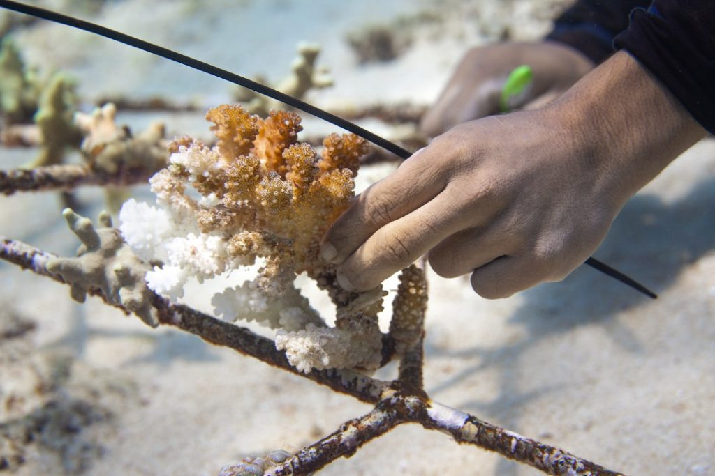 FAQ about corals and coral restoration