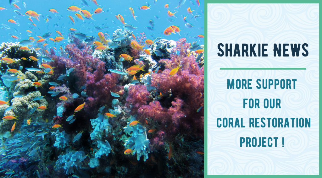 Support our coral restoration project on the Gili Islands in Indonesia and make a donation now!